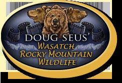 Wasatch Rocky Mountain Wildlife